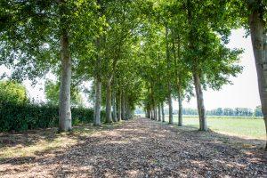 Je ziet een wandelpad met mooie bomen rij met uitzicht verwen.