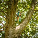 windmobile in de boom wat staat voor het element lucht